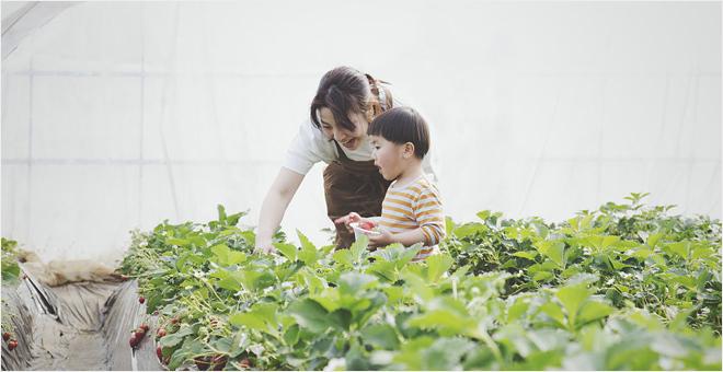 甜美春日行 欢乐摘草莓